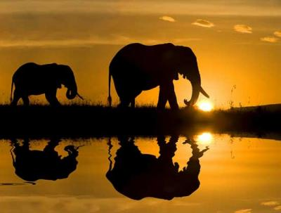 20100525191124-elefantes.jpg