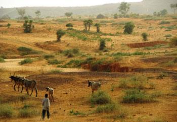 Emergencia alimentaria en Níger